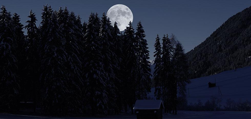 Mondschein-wald